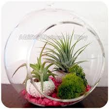86 best terrarium fun images on pinterest terraria air plants