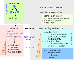 redefining the immune system as a social interface for cooperative