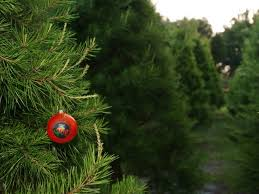 features of real tree when you purchase we care