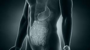 Male Anatomy Video Male Anatomy Colon Positioning In Loop Stock Footage Video 3705506