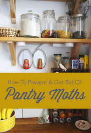 how to prevent u0026amp get rid of pantry moths apartment therapy