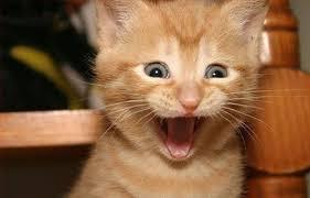 Meme Surprise - surprise cat blank template imgflip