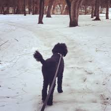 maple grove archives dog walking and pet sitting in minneapolis