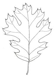 White Oak Leaf Black Oak Leaf Stippleboard 4 John Muir Laws