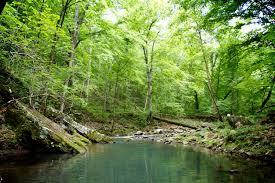 Arkansas nature activities images My blue heaven log cabin resort in northwest arkansas photo jpg
