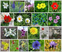 Names And Images Of Flowers - enjoy israel u0027s natural beauty hidabroot