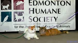 edmonton humane society edmonton pet expo