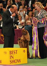thanksgiving day dog show list of best in show winners of the westminster kennel club dog