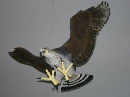 haast u0027s eagle new zealand birds online