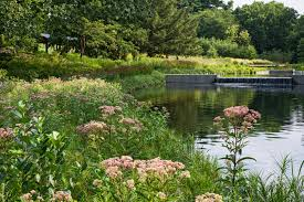 landscaping with native plants required reading the new york botanical garden gardenista