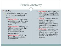 hairless pubis reproductive system ppt video online download