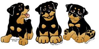 rottweiler gifts rottweiler prints posters paintings