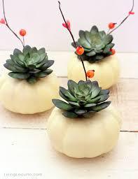 mini pumpkin succulent centerpiece thanksgiving crafts