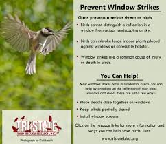 injury prevention tristate bird rescue