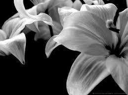 imagenes blancas en fondo negro flores en blanco y negro sensitivity african life and black and