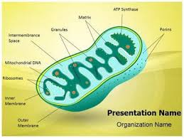 7 best genetics powerpoint templates dna templates images on