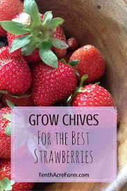 best 25 strawberries garden ideas on pinterest strawberry