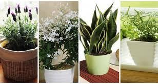 low light plants for bedroom 100 low light plants for bedroom top fragrant houseplants