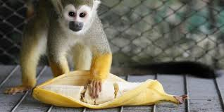 How To Prevent Color Blindness A Cure For Color Blindness That Isn U0027t Just Monkey Business