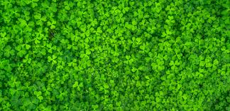 top view photo of clover leaves free stock photo
