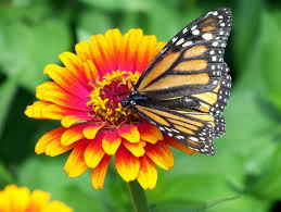 flower and butterfly images free stock photos 11381