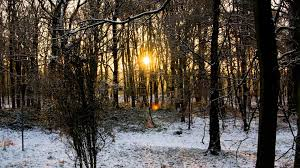 beautiful winter forest snow and sun backgrounds widescreen and hd