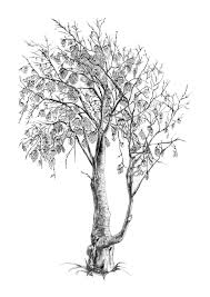 native plants nz nz native trees u2014 kalos chan