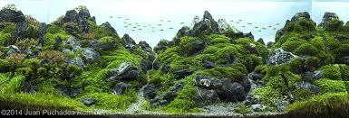 Aquascape Inspiration 2014 Aga Aquascaping Contest 443