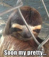 Sloth Meme Pictures - 56 best dirty sloth images on pinterest sloth sloths and funny