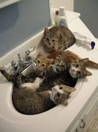 Cat In Bathtub Sinks Design U0026 Décor
