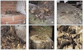 How To Get Rid Of Raccoons In Backyard Raccoon Latrines Not In My Backyard U2013 Effect Measure