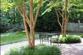 5 best behaved trees to grace a patio huffpost