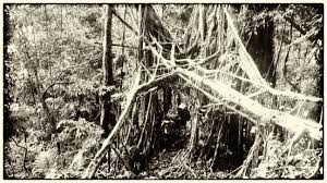 What Is Root Bridge Lost In The Clouds Tourism In Meghalaya U2013 Raiot