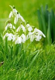 283 best u2022 spring u2022 images on pinterest spring nature and flowers