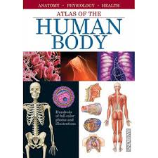 Anatomy And Physiology Introduction To The Human Body Buy Understanding The Human Body An Introduction To Anatomy And