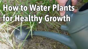 watering your vegetable garden how to water plants for healthier