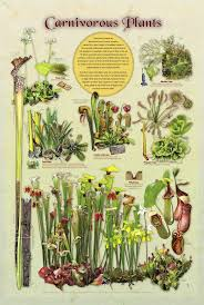 7 best botany images on pinterest