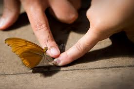 butterfly touch stock photo image of yellow elegance 1031960