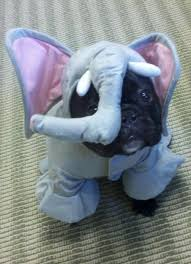 Frenchie Halloween Costume 115 French Bulldogs Images Animals French