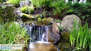 Bellevue Botanical Garden Lights Stunning Bellevue Botanical Garden Bellevue Botanical Garden