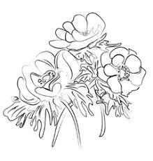 ink sketch calla flower royalty free vector image