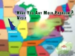 best bathroom cleaner for mold and mildew mold removal cost bathroom mold removal cost without bleach best