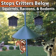 how to keep raccoons out of your yard and garden home outdoor