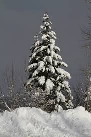 file snowy tree 5230371718 jpg wikimedia commons