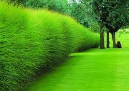 tips to landscaping with ornamental grass