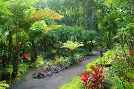 What Are Botanical Gardens Scenic Drive To A Botanical Garden On Big Island Hawaii