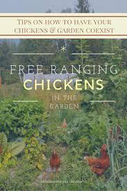 chickens in backyard 258 best chickens in the garden images on pinterest chicken