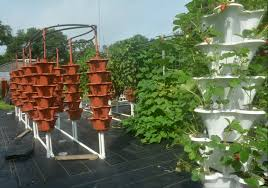 farm goes vertical to net tall yields