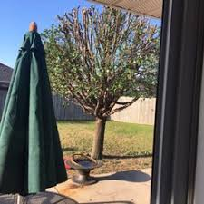 browns tree brown s tree care tree services 4 mckissic creek rd