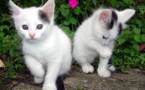 animal cat walldevil